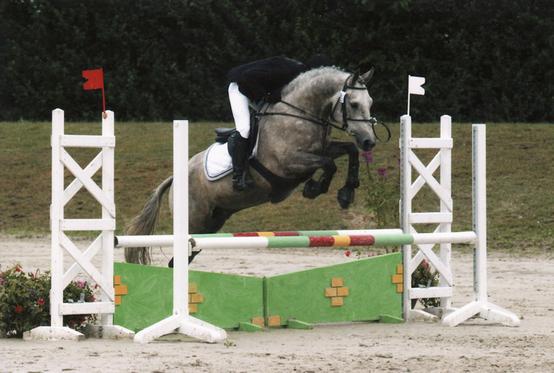 Pour CCE et CSO. A vendre grand poney hors cotes / petit cheval - Quahinée du Gué Péan