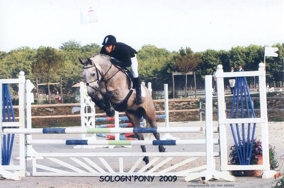 A Vendre Grand poney hors cotes / Petit cheval - CCE et CSO - Quahinée du Gué Péan VENDU