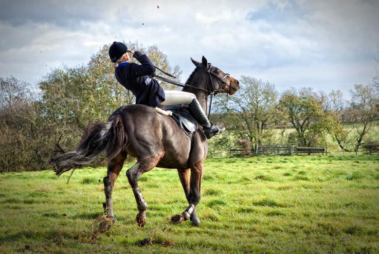 En panne de communication avec votre cheval ?