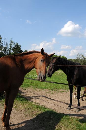 Les vacances, cela existe aussi pour votre cheval !