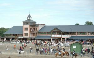 Quelques nouvelles de nos chevaux et poneys vendus
