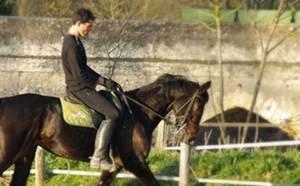 A vendre Jument AQPS Orphée du Perche pour dressage ou élevage...